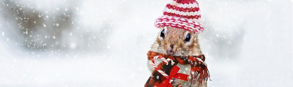 Vánoce PF